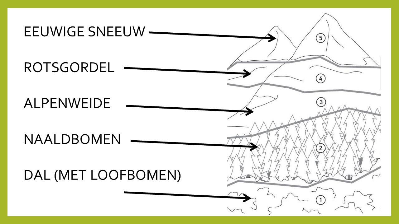 EEUWIGE SNEEUW ROTSGORDEL ALPENWEIDE NAALDBOMEN DAL (MET LOOFBOMEN)