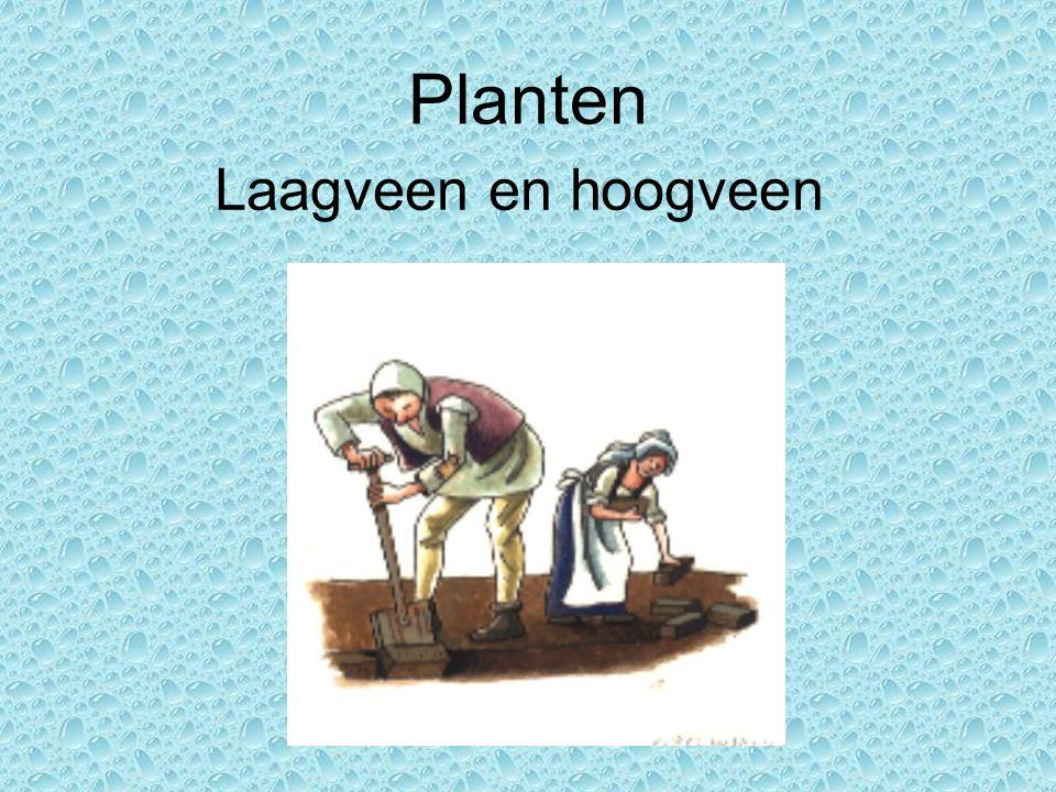 Planten Laagveen en hoogveen