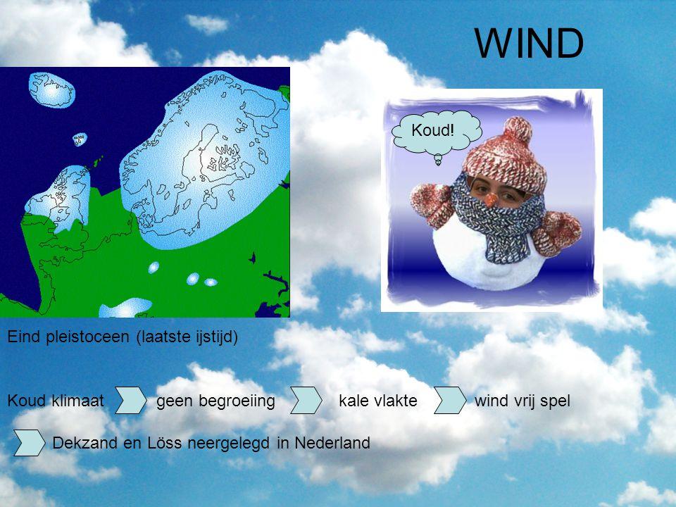 WIND Koud! Eind pleistoceen (laatste ijstijd)