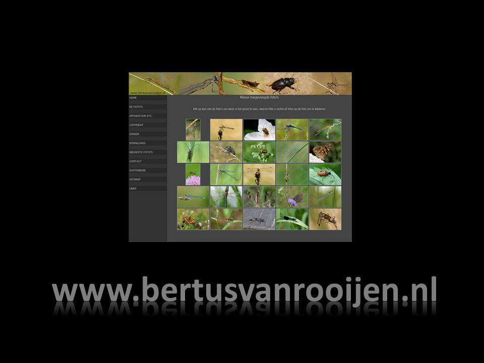 www.bertusvanrooijen.nl