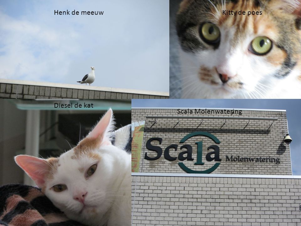 Henk de meeuw Kitty de poes Diesel de kat Scala Molenwatering