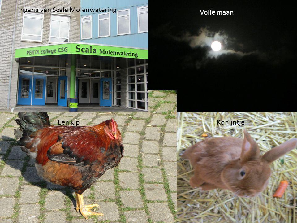 Ingang van Scala Molenwatering