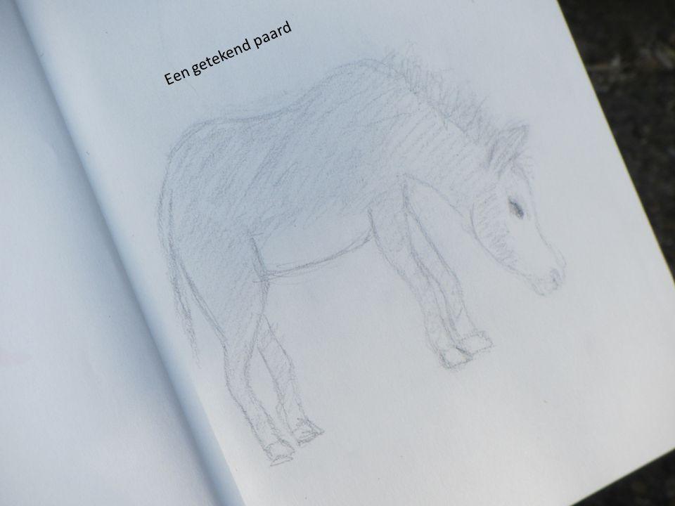 Een getekend paard