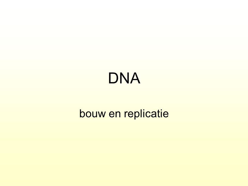 DNA bouw en replicatie