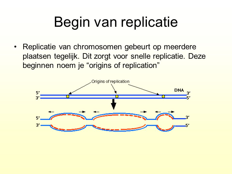 Begin van replicatie
