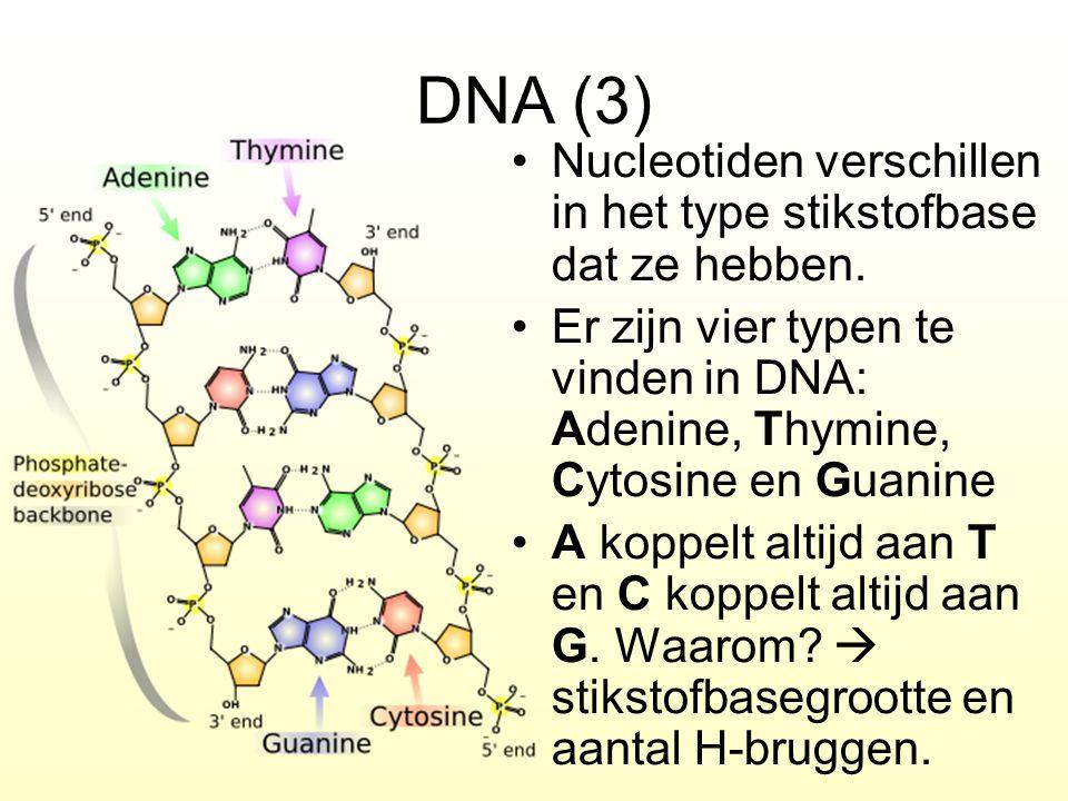DNA (3) Nucleotiden verschillen in het type stikstofbase dat ze hebben. Er zijn vier typen te vinden in DNA: Adenine, Thymine, Cytosine en Guanine.