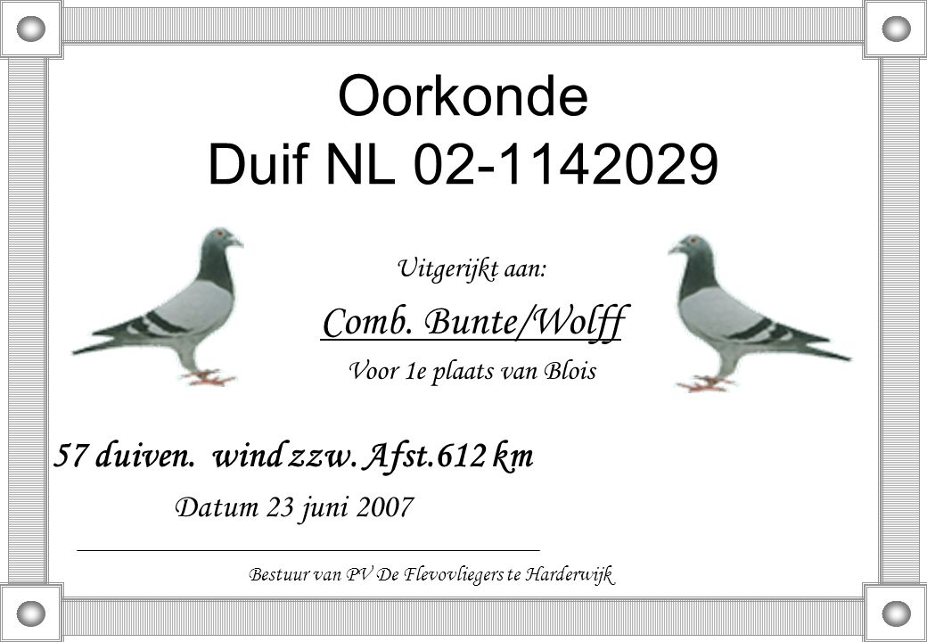 Oorkonde Duif NL 02-1142029 Comb. Bunte/Wolff