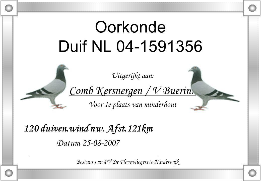 Oorkonde Duif NL 04-1591356 Comb Kersnergen / V Buerink