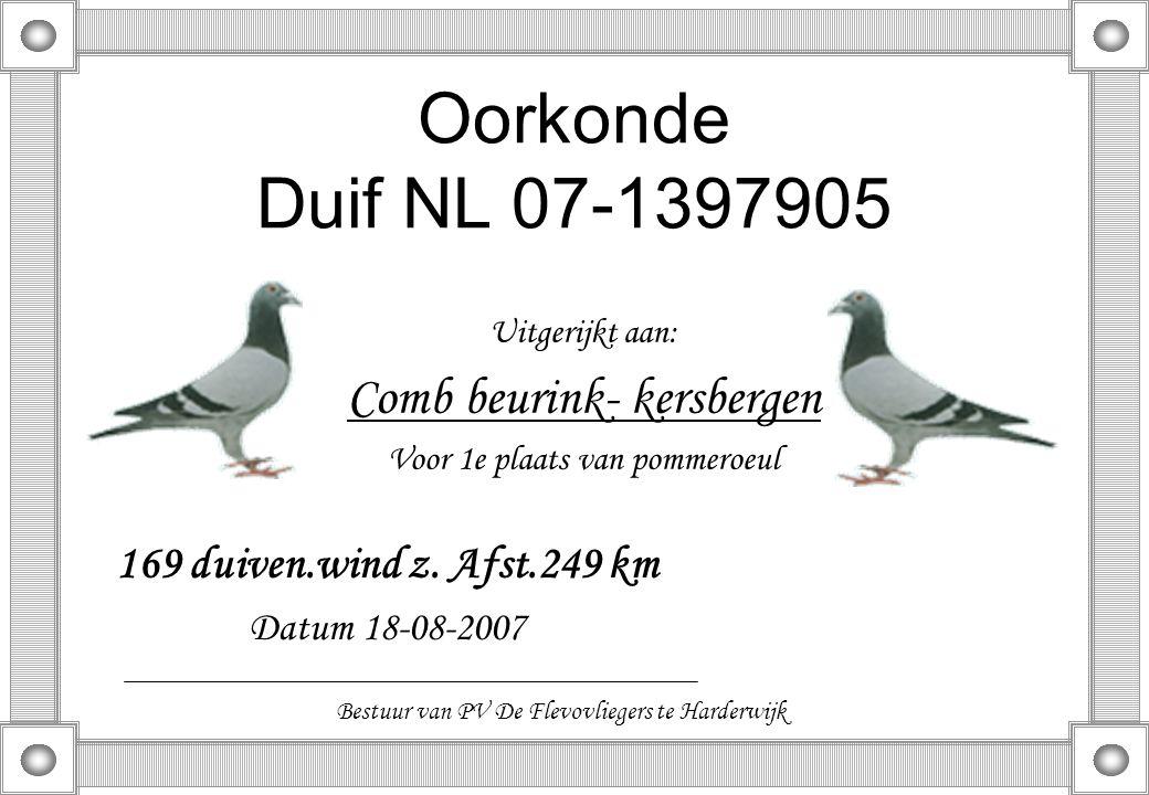 Oorkonde Duif NL 07-1397905 Comb beurink- kersbergen
