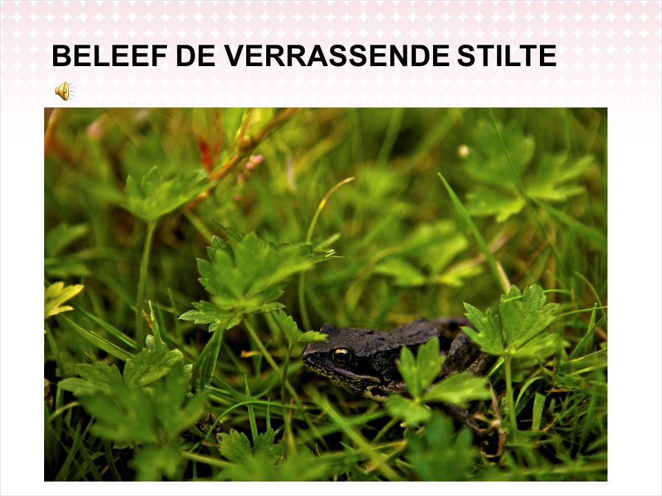 BELEEF DE VERRASSENDE STILTE