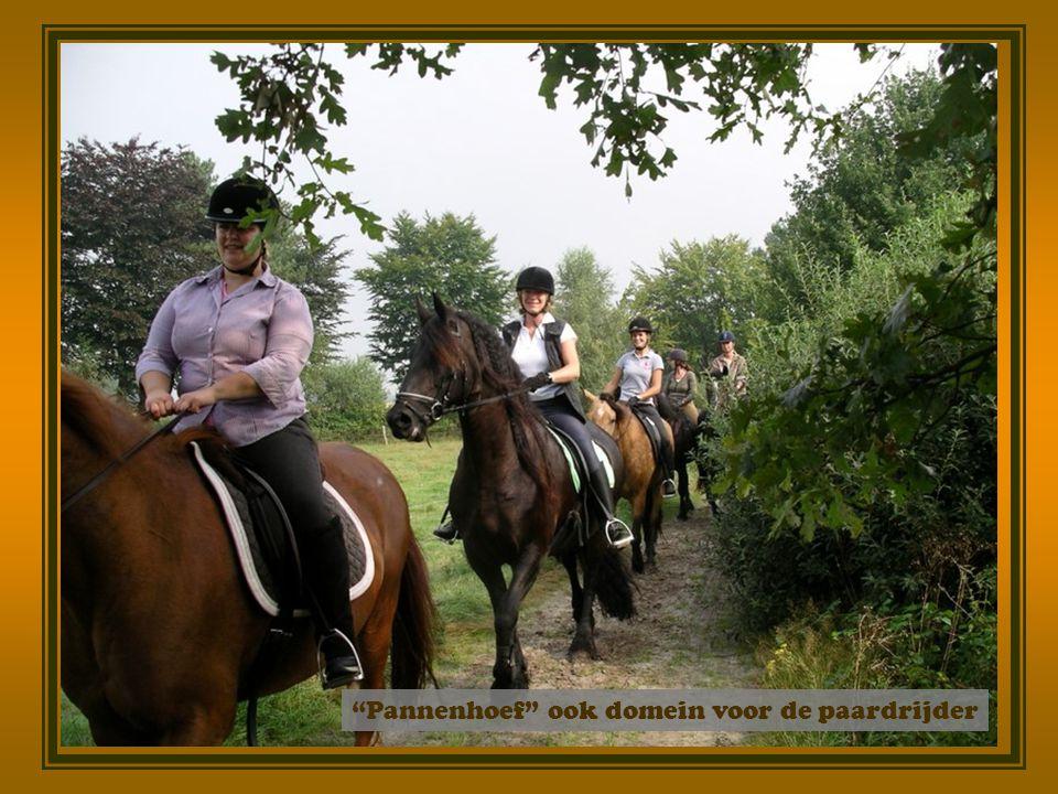 Pannenhoef ook domein voor de paardrijder