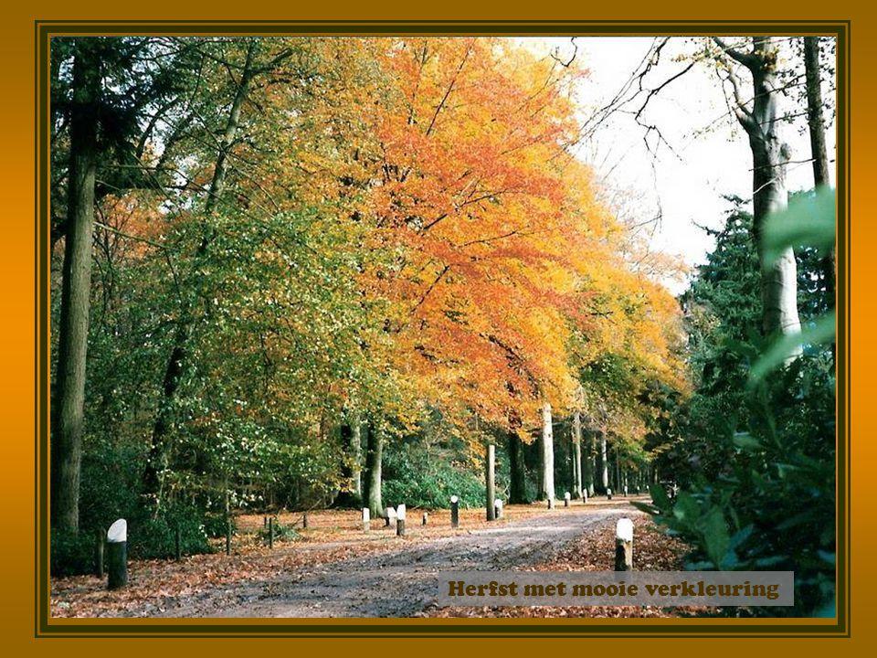 Herfst met mooie verkleuring