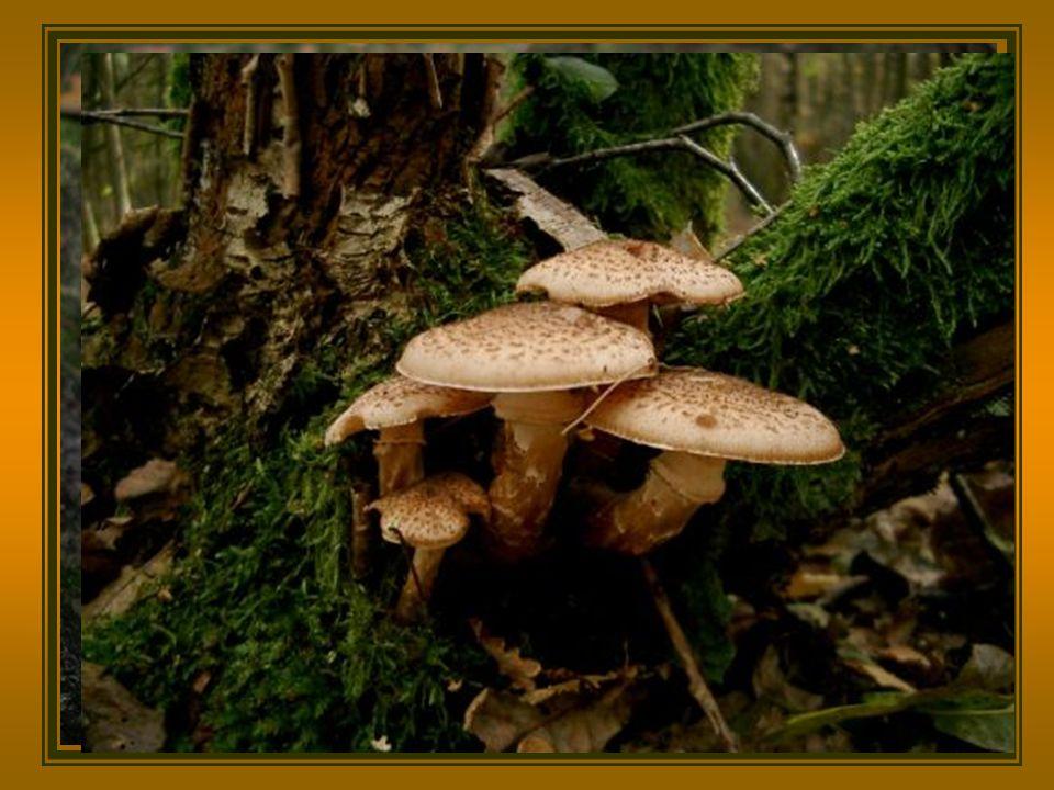 …..... en met de herfst komen de paddenstoelen……..