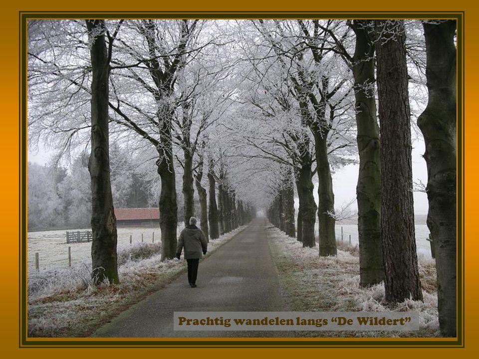 Prachtig wandelen langs De Wildert