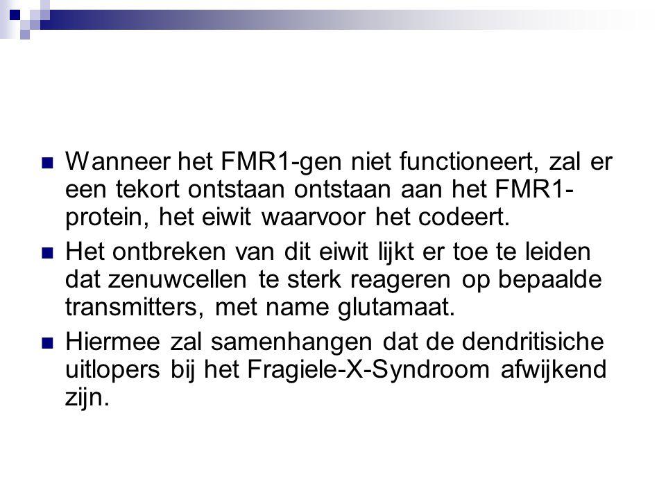Wanneer het FMR1-gen niet functioneert, zal er een tekort ontstaan ontstaan aan het FMR1-protein, het eiwit waarvoor het codeert.