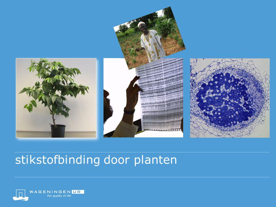 stikstofbinding door planten