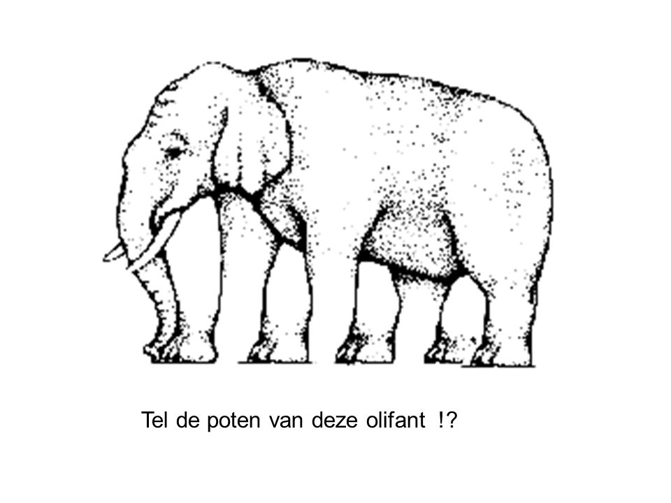 Tel de poten van deze olifant !