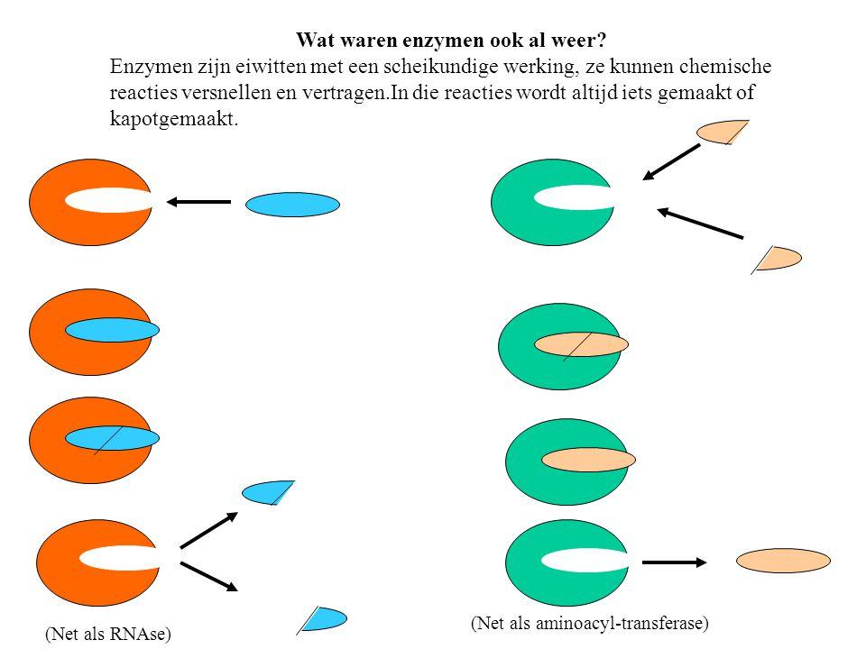 Wat waren enzymen ook al weer