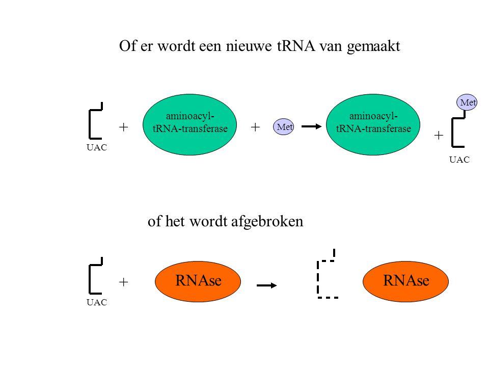 Of er wordt een nieuwe tRNA van gemaakt