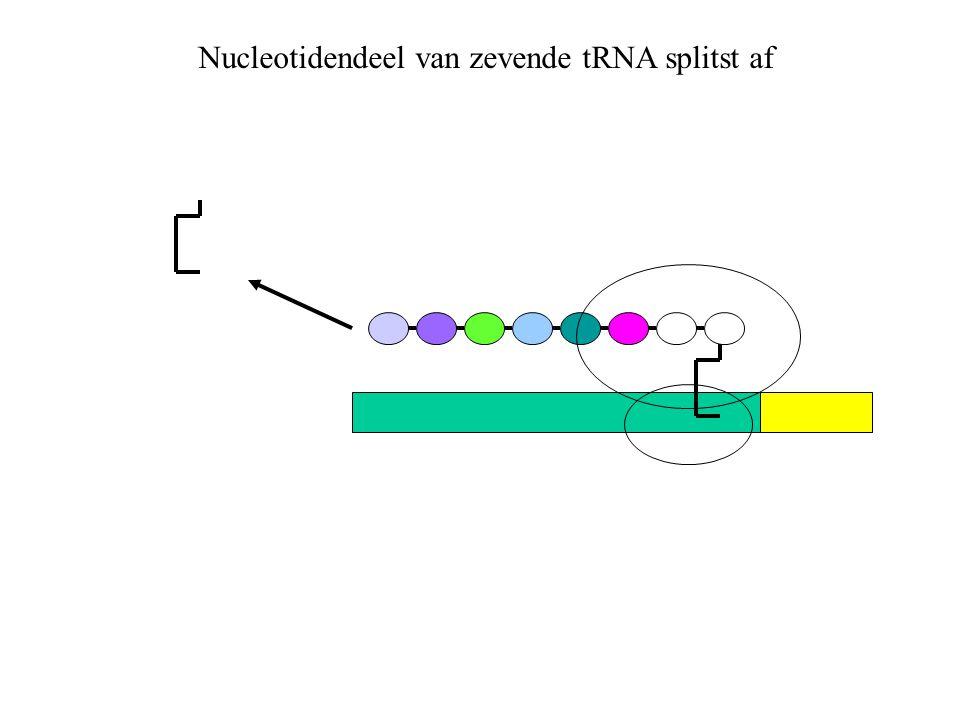 Nucleotidendeel van zevende tRNA splitst af