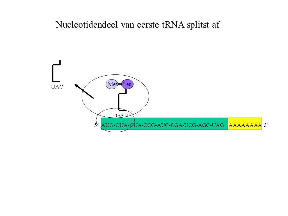 Nucleotidendeel van eerste tRNA splitst af
