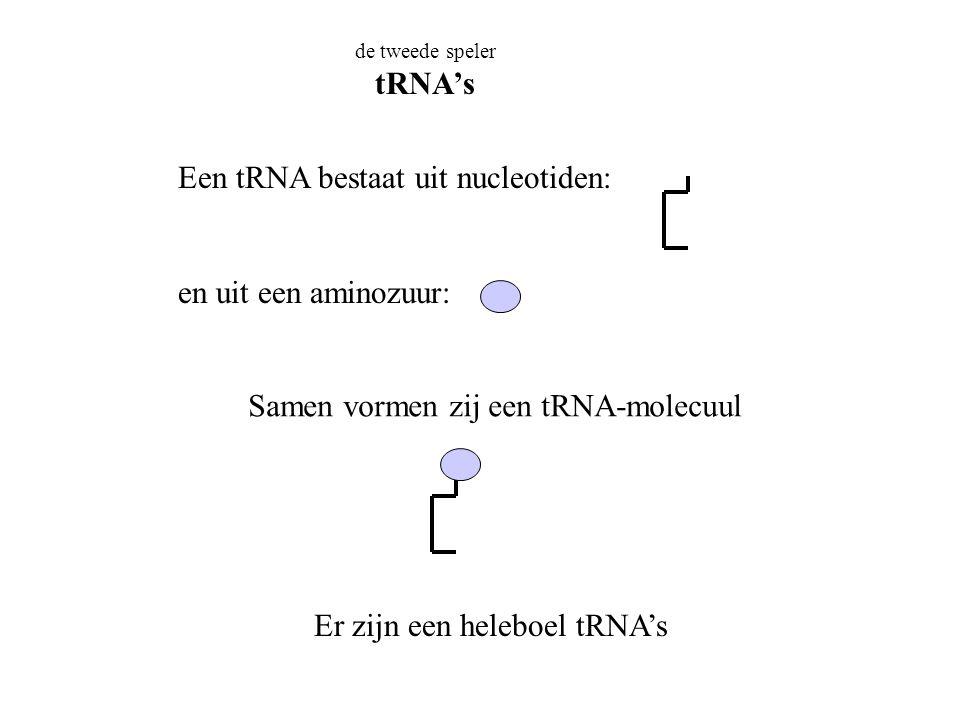 Een tRNA bestaat uit nucleotiden: