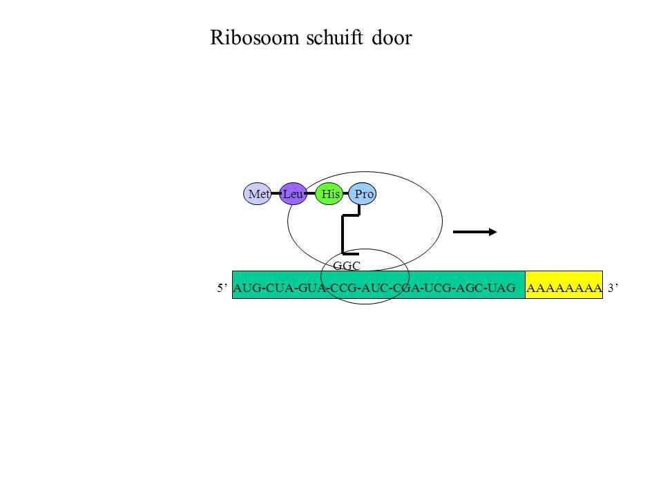 Ribosoom schuift door Met Leu His Pro GGC