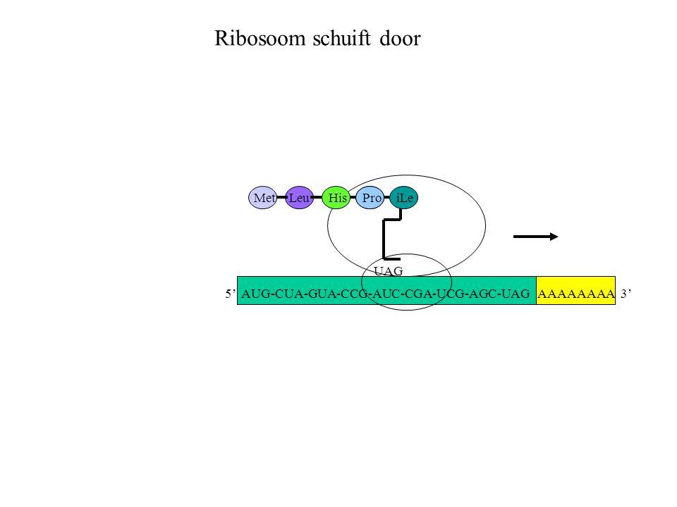 Ribosoom schuift door Met Leu His Pro iLe UAG