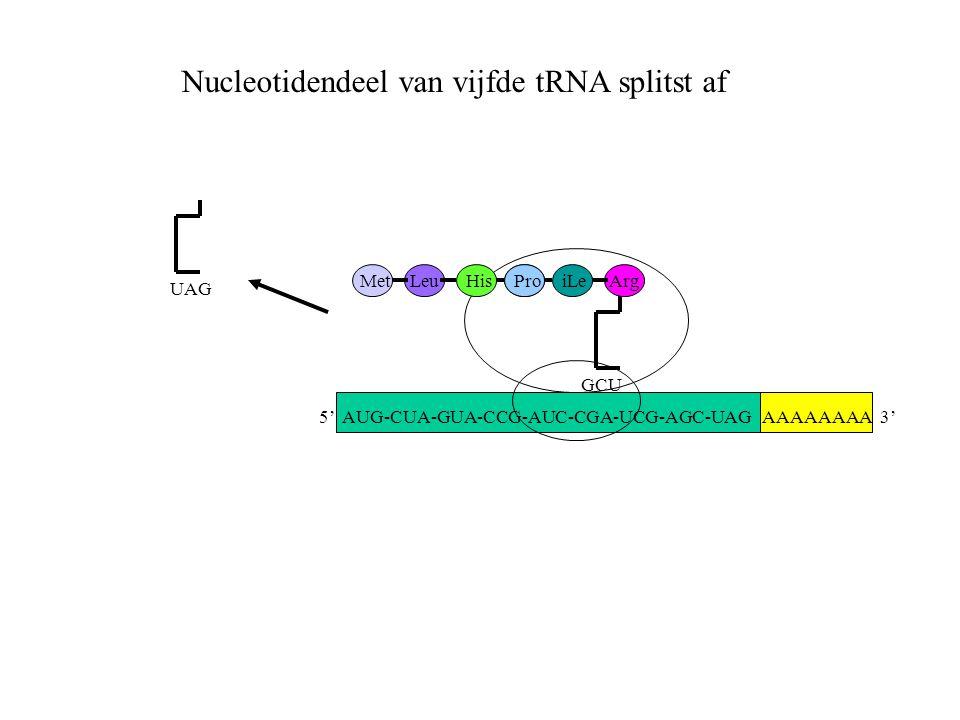 Nucleotidendeel van vijfde tRNA splitst af