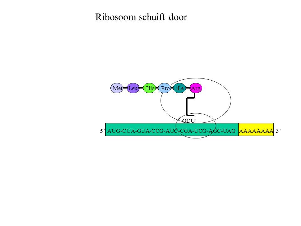 Ribosoom schuift door Met Leu His Pro iLe Arg GCU
