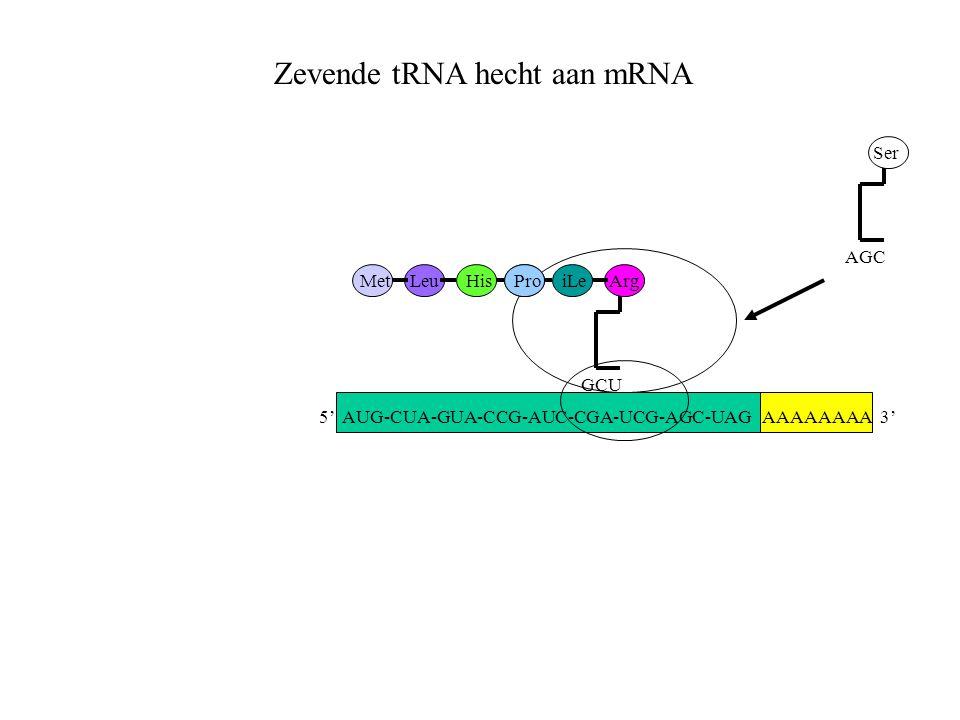Zevende tRNA hecht aan mRNA