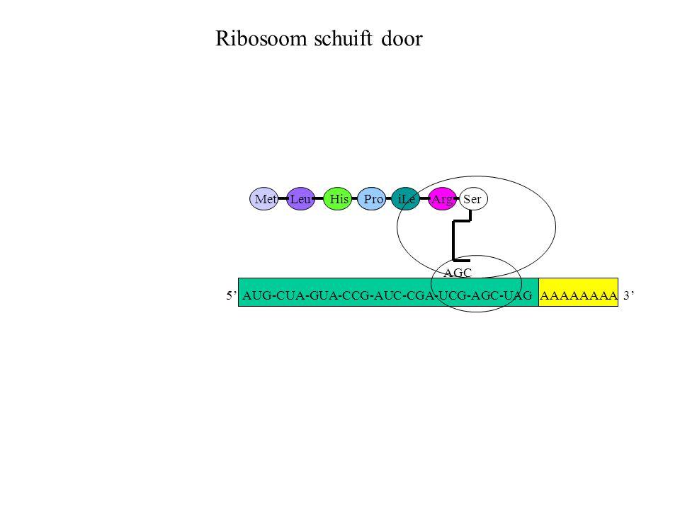Ribosoom schuift door Met Leu His Pro iLe Arg Ser AGC