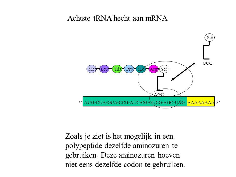 Achtste tRNA hecht aan mRNA