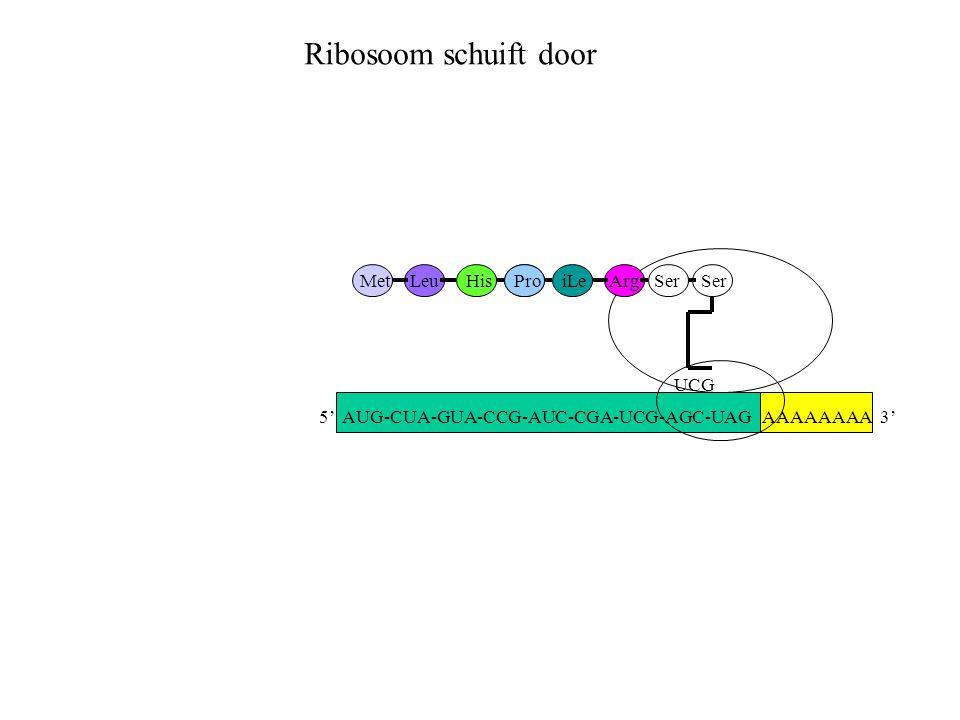 Ribosoom schuift door Met Leu His Pro iLe Arg Ser Ser UCG