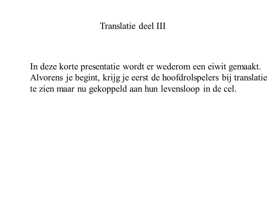 Translatie deel III In deze korte presentatie wordt er wederom een eiwit gemaakt.
