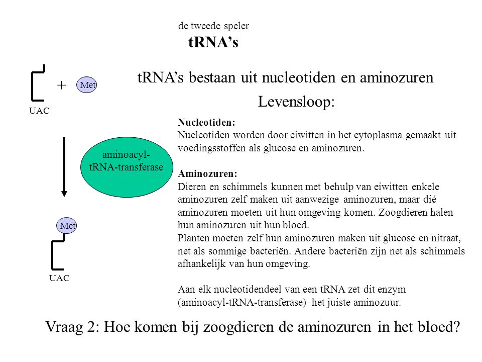 tRNA's bestaan uit nucleotiden en aminozuren + Levensloop: