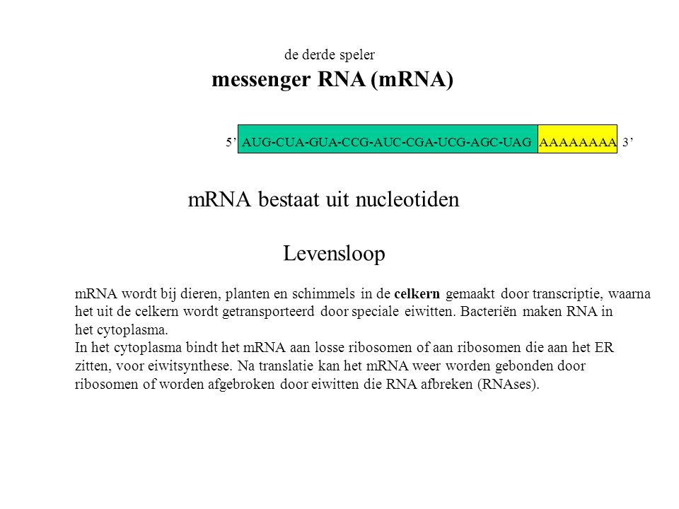 mRNA bestaat uit nucleotiden