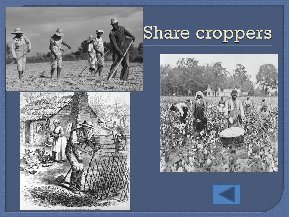 Share croppers