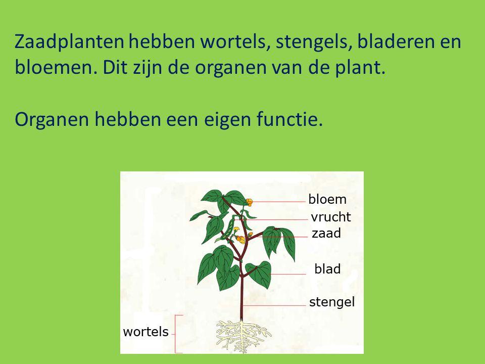Zaadplanten hebben wortels, stengels, bladeren en bloemen