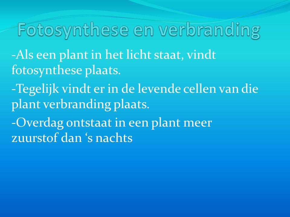 Fotosynthese en verbranding
