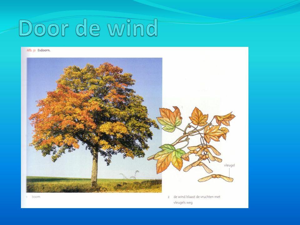 Door de wind