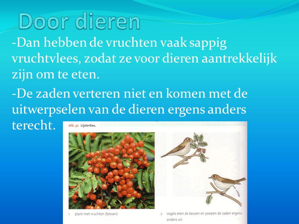 Door dieren -Dan hebben de vruchten vaak sappig vruchtvlees, zodat ze voor dieren aantrekkelijk zijn om te eten.