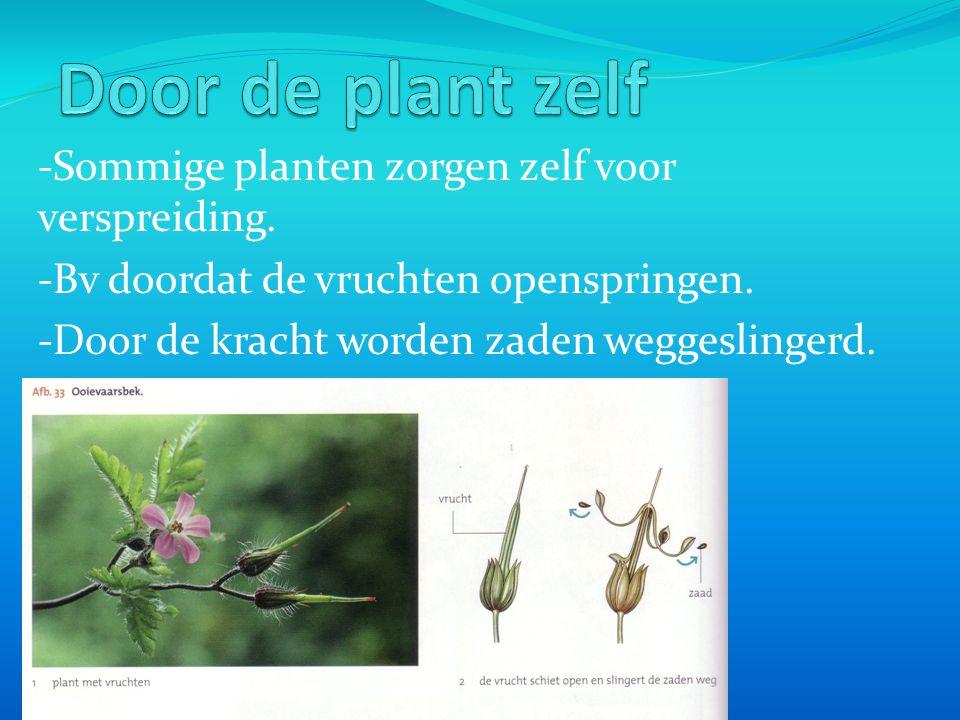 Door de plant zelf -Sommige planten zorgen zelf voor verspreiding.