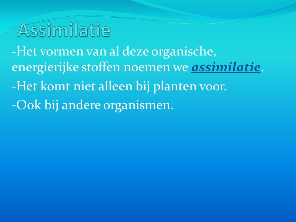 Assimilatie -Het vormen van al deze organische, energierijke stoffen noemen we assimilatie. -Het komt niet alleen bij planten voor.