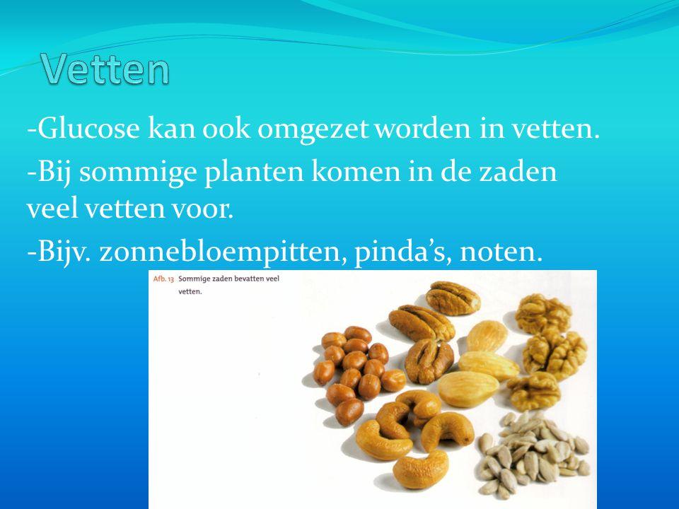 Vetten -Glucose kan ook omgezet worden in vetten.