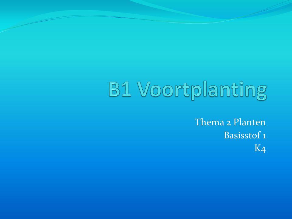 Thema 2 Planten Basisstof 1 K4