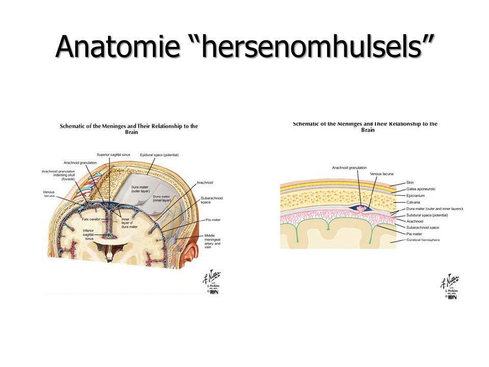 Anatomie hersenomhulsels