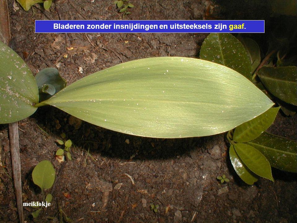 Bladeren zonder insnijdingen en uitsteeksels zijn gaaf.