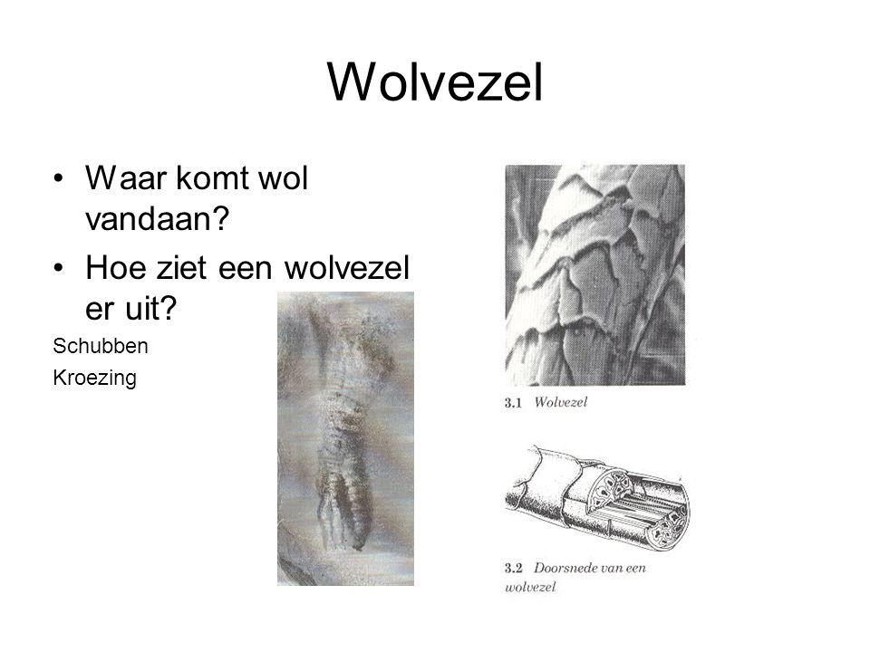 Wolvezel Waar komt wol vandaan Hoe ziet een wolvezel er uit Schubben