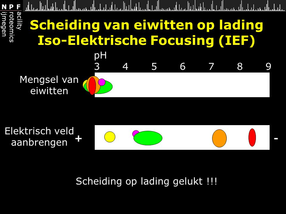 Scheiding van eiwitten op lading Iso-Elektrische Focusing (IEF)